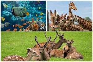 Eintrittskarten für Tierparks