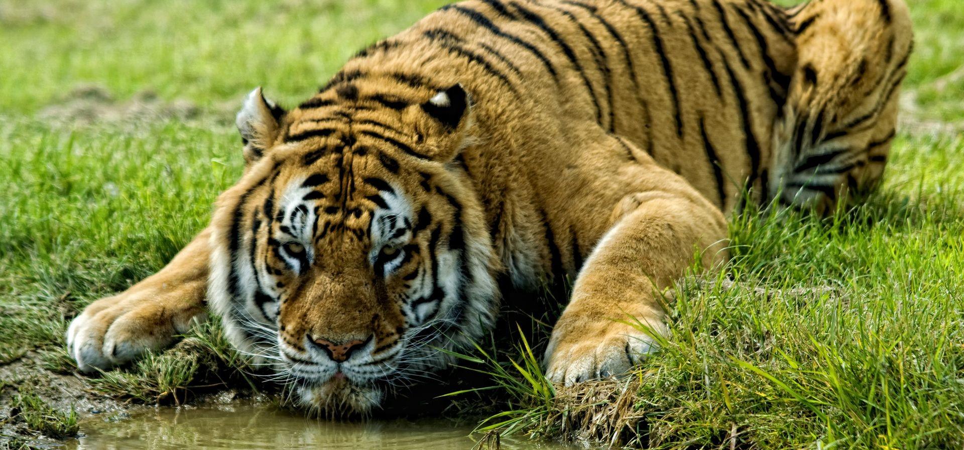 Destination très active - Parc animalier Planète Sauvage