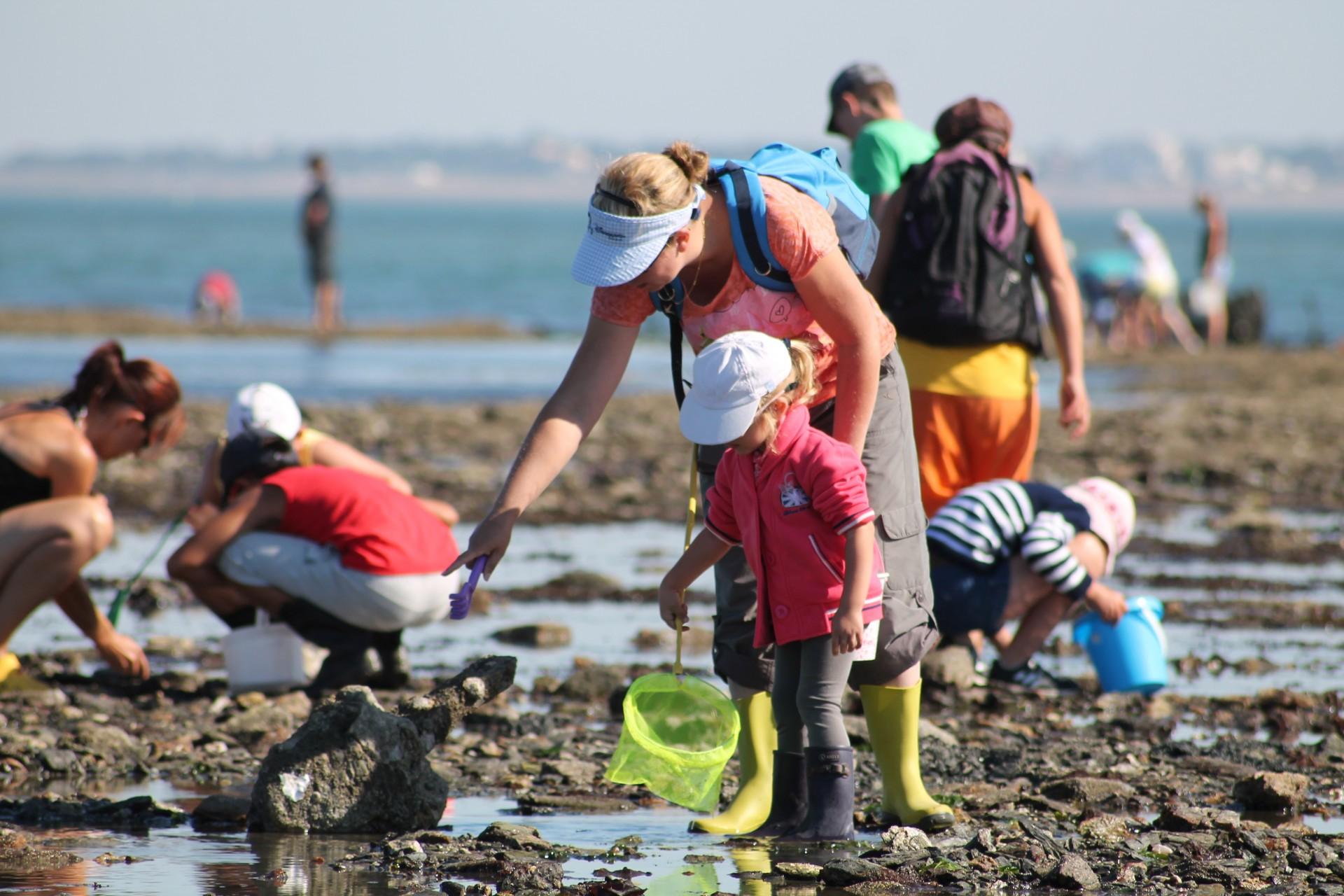 Sortie pêche à pied à La Plaine-sur-Mer