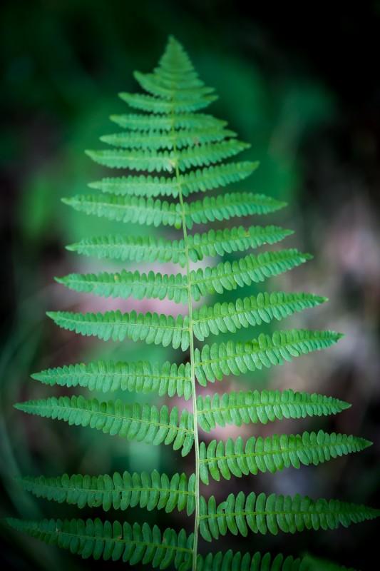 forêt de princé, forêt, chéméré, chaumes en retz, balade en forêt