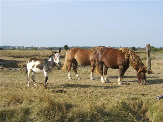 marais breton, villeneuve en retz, animaux marais