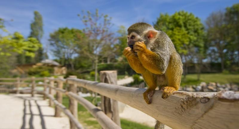 safari, port saint père, planète sauvage, parc animalier