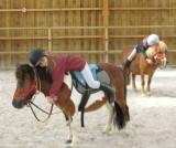 poneys, espace equestre pays de retz pornic cheval ethologie équitation ethologique équithérapie