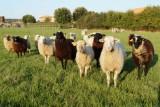 La fontaine aux moutons