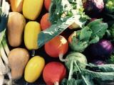 légumes de saison, Les Hameaux bio Pornic