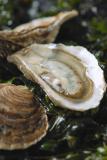 La Perle de Jade, producteur d'huîtres à La Bernerie