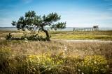 dune du collet, cordon dunaire, espace naturel sensible, réserve naturelle, plage, moutiers, les moutiers en retz