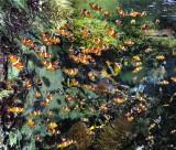 Océarium du Croisic, aquarium, poissons,