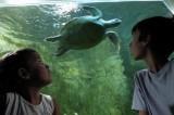 tortue-marine-aquarium-croisic-OCEARIUM DU CROISIC visite autour pornic