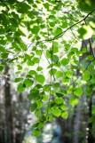 Rêveries dans les iles enchantées de la forêt de Princé