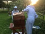 Rucher de l'abeille de Jade