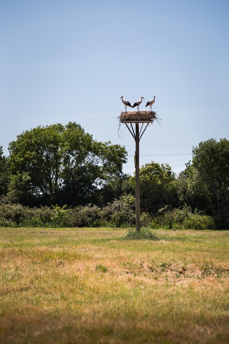 Les cigognes - Vue