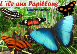 ile-aux-papillons