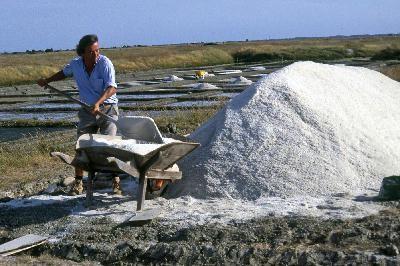 Daniel ROBARD récolte du Sel, Sel de Bourgneuf en Retz