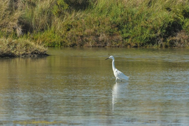 Les oiseaux du Marais