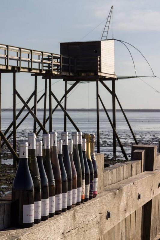 domaine du sillon cotier, vigneron, vignoble, les moutiers en retz, pays de retz, destination pornic, vignoble, vigne, vin, producteur