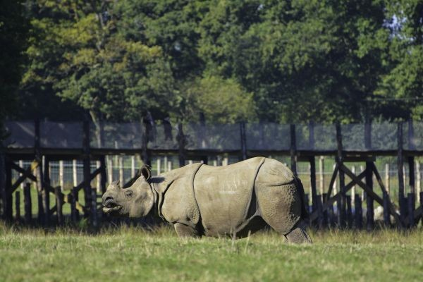 rhino-5933