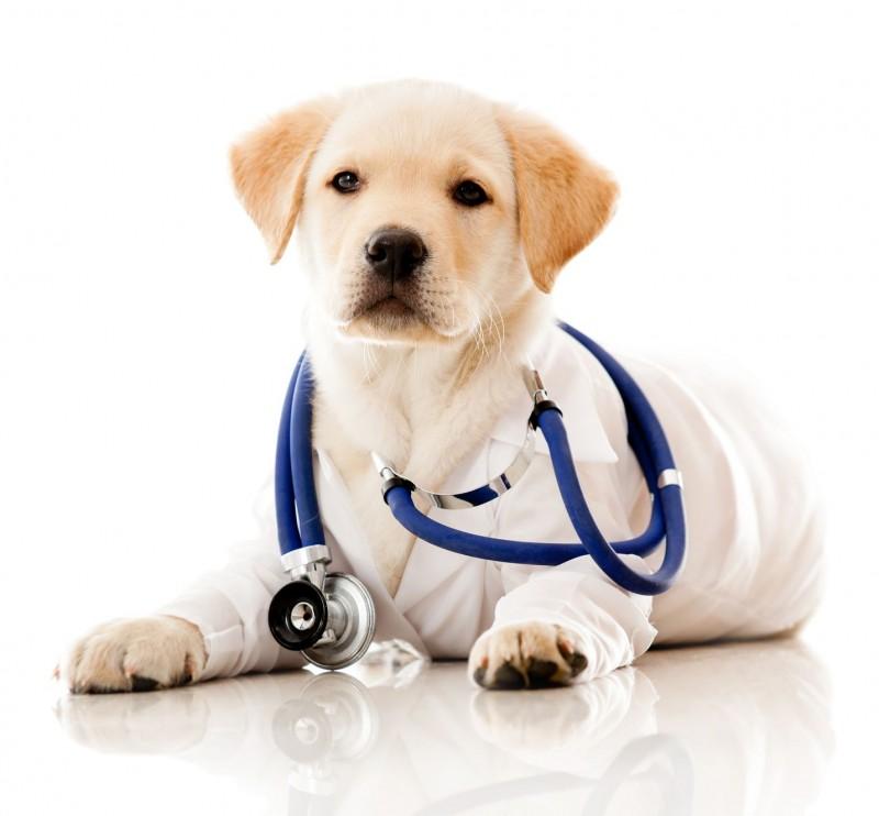 Clinique Vétérinaire de Jade