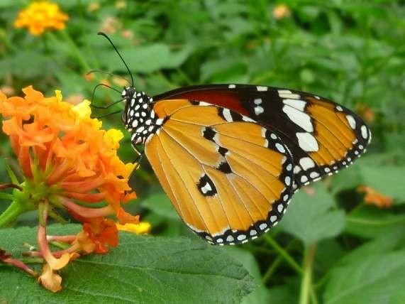 Ile aux Papillons Noirmoutier