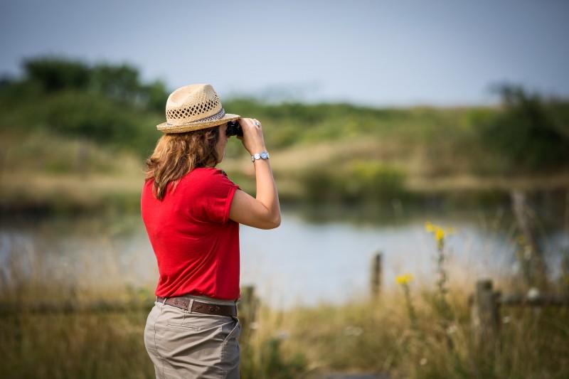 marais, marais de lyarne, marais breton, observatoire des oiseaux, ornithologie, nature, moutiers, les moutiers en retz