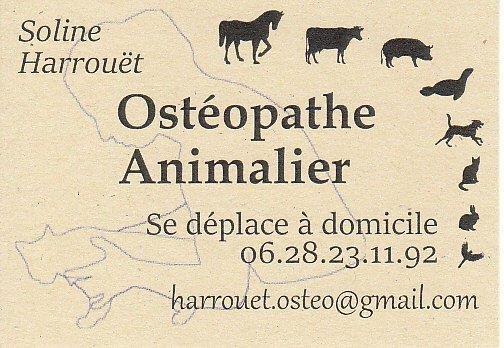Osteopathe Animalier Animaux St Michel Tharon Veto Medecine