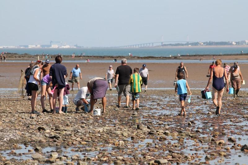 Pêche à pied en famille à Port Giraud