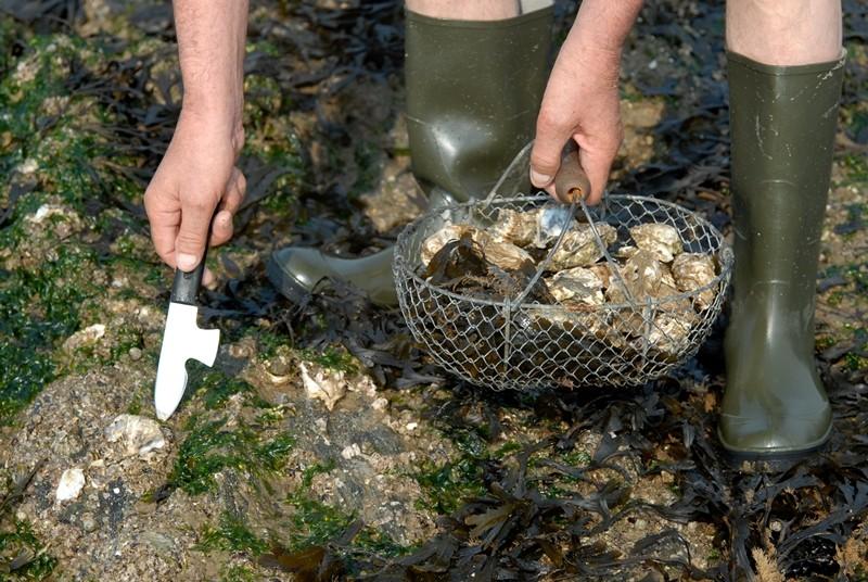 huîtres, pêche à pied, couteau pêche aux huitres