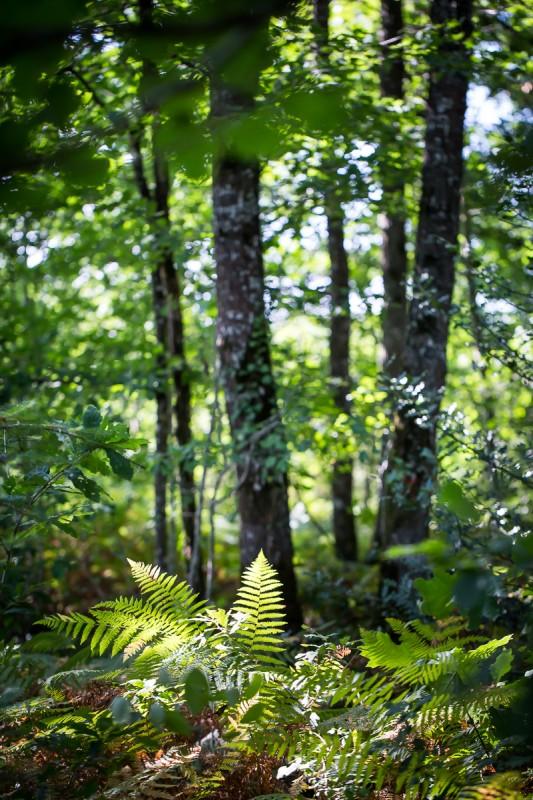 nature, verdure, forêt, arbre, promenade, circuit pédestre, randonnée