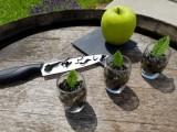 cuisinons-les-algues-3r-echos-nature-26657