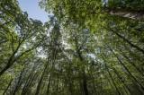 ECHOS NATURE - Forêt de Princé