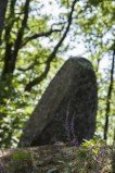 ECHOS NATURE - Forêt de Princé et Menhir de la Pierre Levée