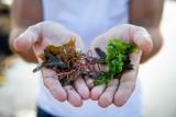 Sortie nature avec Echos Nature : les algues