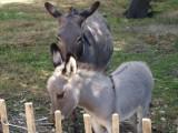 Quelques animaux de la Petite Maison dans la Prairie