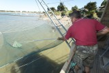 Ramassage des poissons dans le filet avec l'épuisette