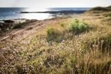 Réserve Naturelle Régionale de Préfailles nature Pointe St-Gildas