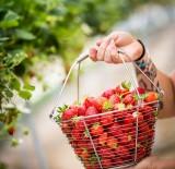 pornic artisanat la fraiseraie visite entreprise savoir faire patrimoine glace sorbet fraise groupe