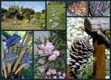 visites-pornic-par-les-pornicais-le-jardin-du-plessis-brigitte-bachelier-8-22523