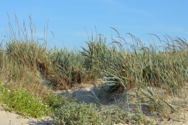echos-nature-la-dune-entre-terre-et-mer-23065