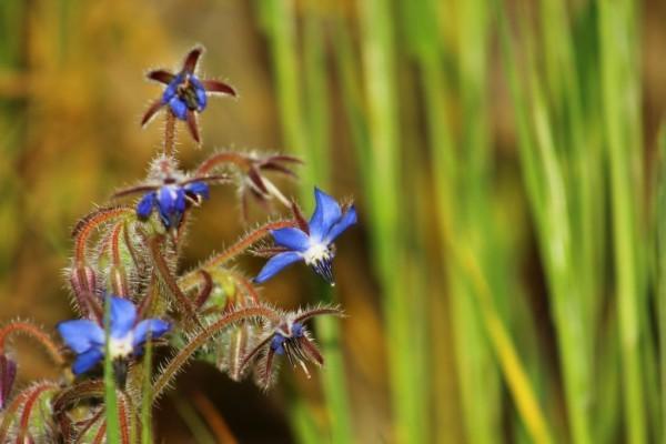 ECHOS NATURE - MILLE ET UNE VERTUS DES PLANTES SAUVAGES