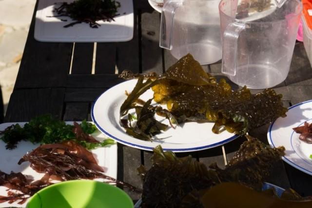ECHOS NATURE - Atelier des algues