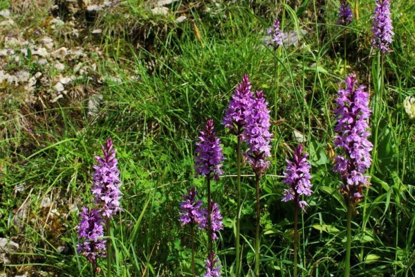 Sortie nature : les orchidées à l'état sauvage avec Échos Nature