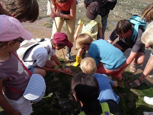 Pêche à pied plage de la Fontaine aux Bretons
