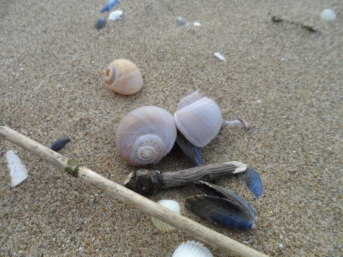Sortie nature : Initiatives océanes avec ECHOS NATURE