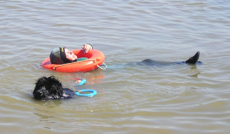 Chien de sauvetage, Chien de sauvetage prefailles, ACSA prefailles, démonstration chien de sauvetage, prefailles,