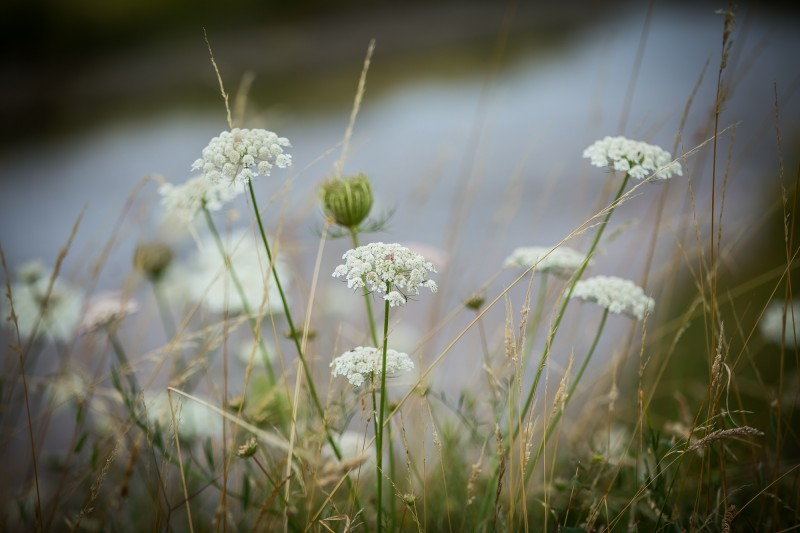 Sortie nature : au coeur du Marais de Lyarne