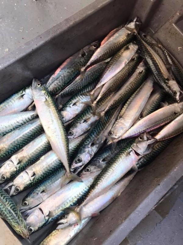 Pêche en mer Evasion