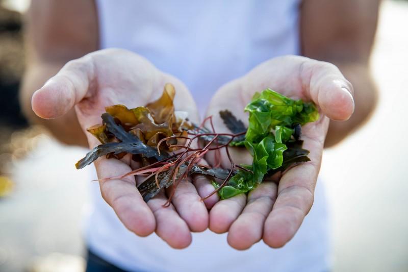 ECHOS NATURE, terre nature, guide faune flore, algues saveurs marines, DESTINATION PORNIC