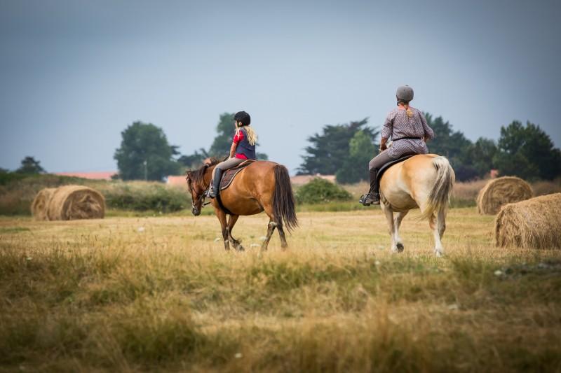 Promenade à cheval en arrière pays