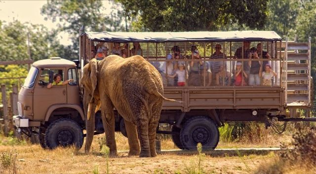 Visite du parc animalier PLANETE SAUVAGE